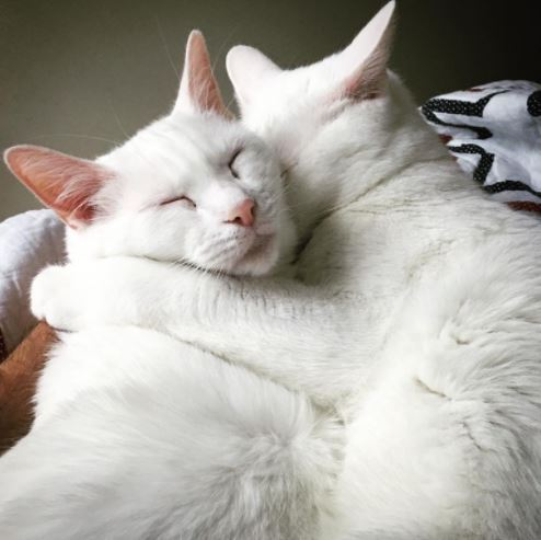 deaf cat brothers adopted together