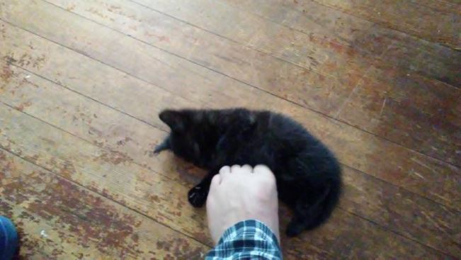 cats progression into foot murdering 4