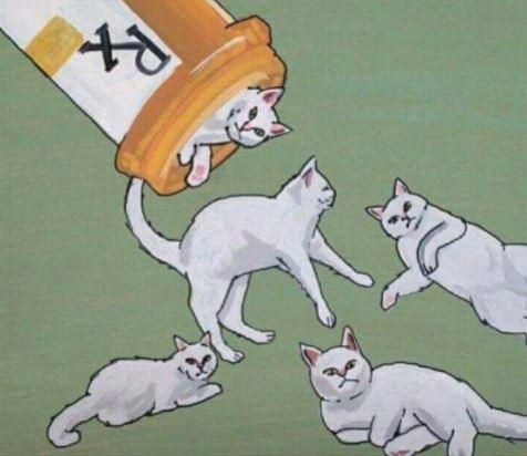 cat prescription depression