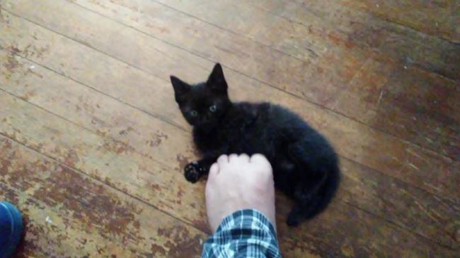 cats progression into foot murdering 1
