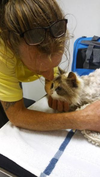 missing blind and deaf senior cat reunites with owner