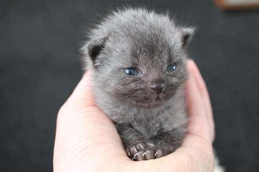rescued kitten inspires childrens book kind to animals 1