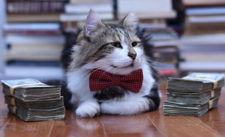cats in business attire boss 3