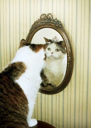 10 cat proverbs 4