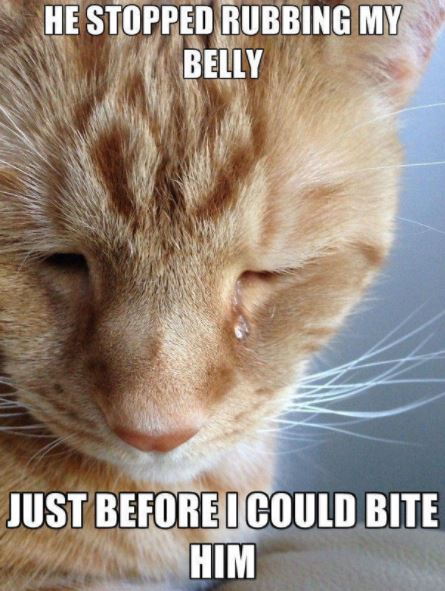 first world cat problems 3