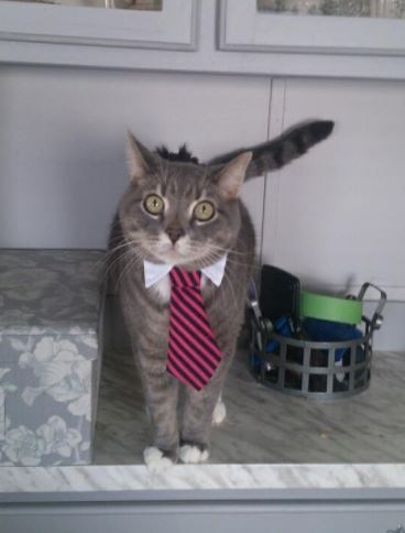 cats in business attire boss 2