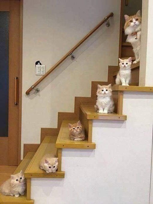 10 cats proverb 3