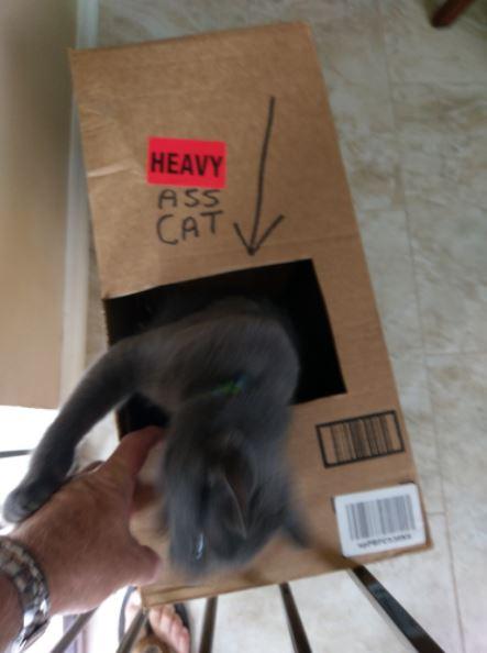 cat in box 3
