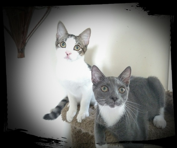 spunkee and sparkee kittens that need a home