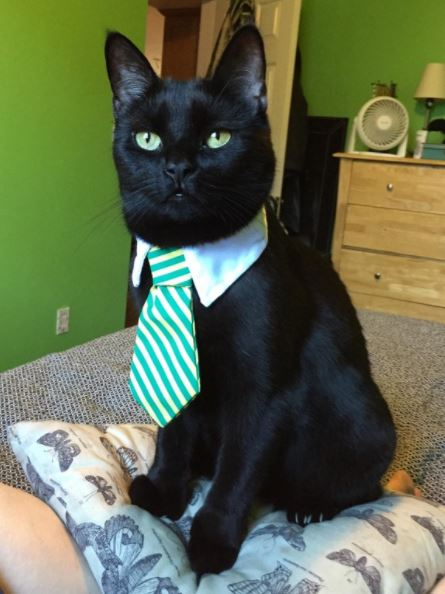 cats in business attire boss 4