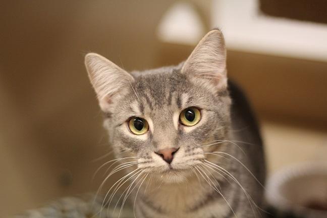 hushpuppy cat needs a home