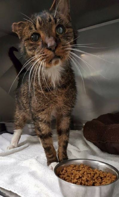 scraggly senior cat finds purrfect forever home and family