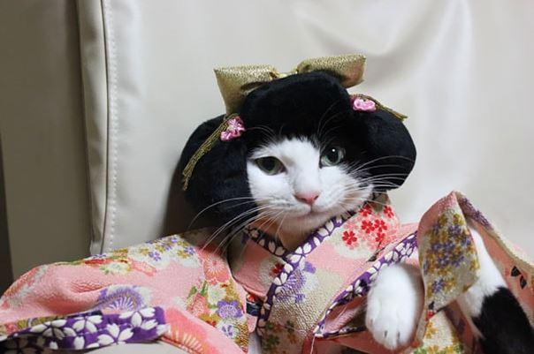 cats in kimonos 11