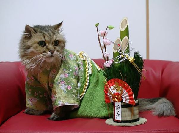 cats in kimonos 6