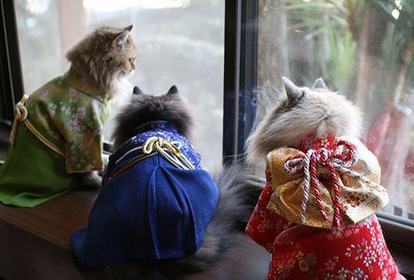 cats in kimonos 5