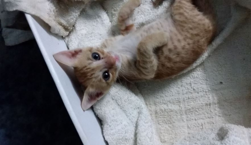 stray kitten found in trash gets forever home 4