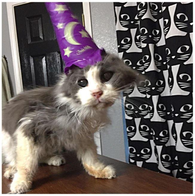 senior cats 12