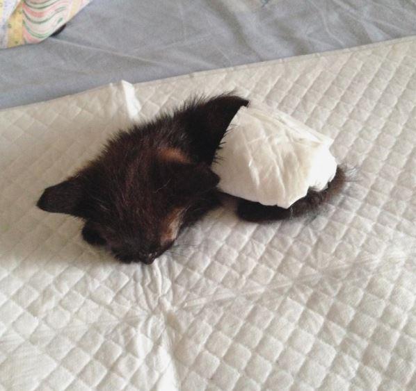black kitten thrown away in bushes gets rescued 6