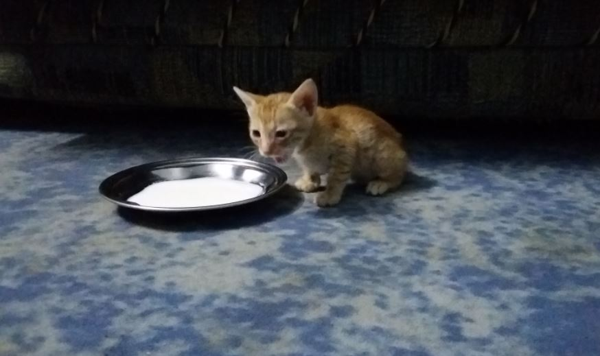 stray kitten found in trash gets forever home 2