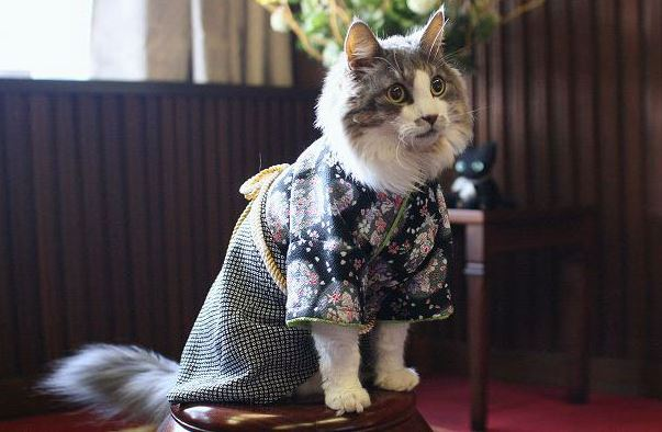 cats in kimonos 14