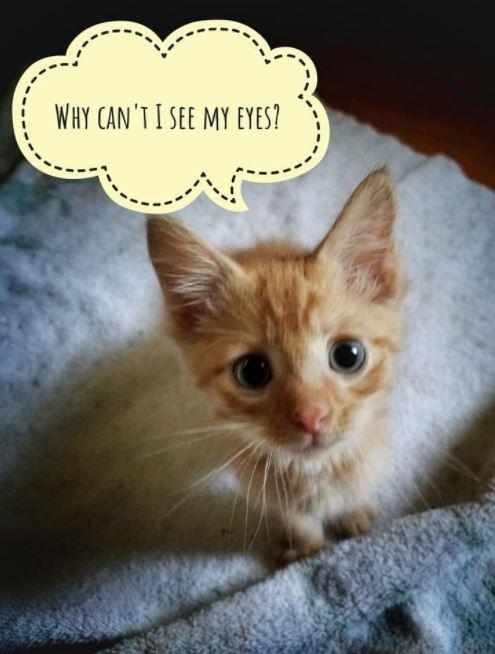 worried kitten gets captions 4