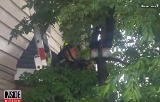 10 year old boy climbs tree to save cat 4