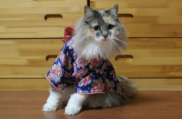 Cats In Kimonos Are Totally A Thing In Japan Gallery