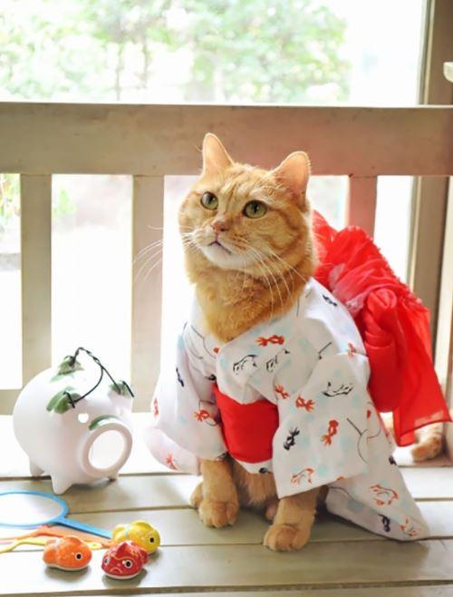 cats in kimonos 2