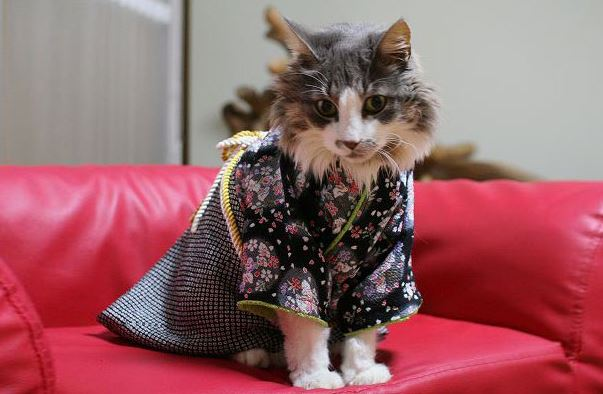 cats in kimonos 7