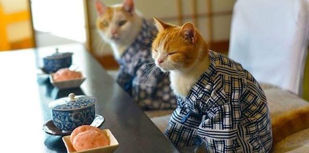 cats in kimonos 1