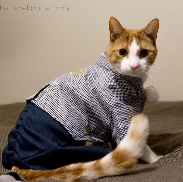 cats in kimonos 3