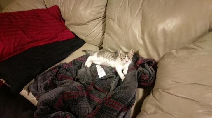 kitten found shot in streets gets forever home 10