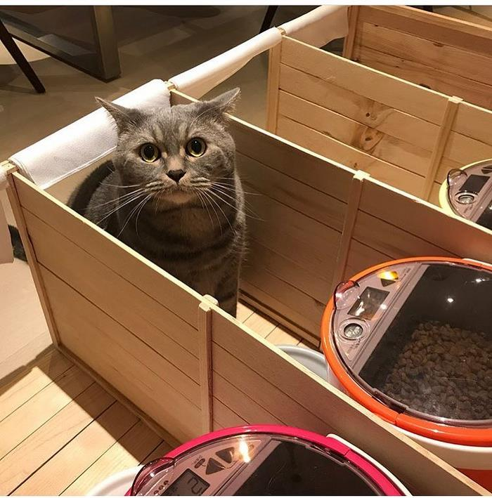 chubby cat dad inspires food partitions 6