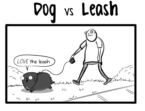 Picking Up Dogs Vs Cats