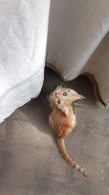 stray kitten found in trash gets forever home 9