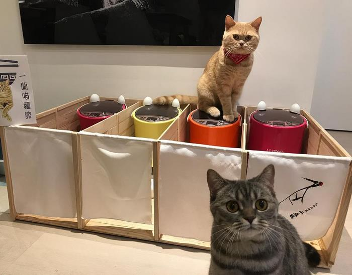 chubby cat dad inspires food partitions 5