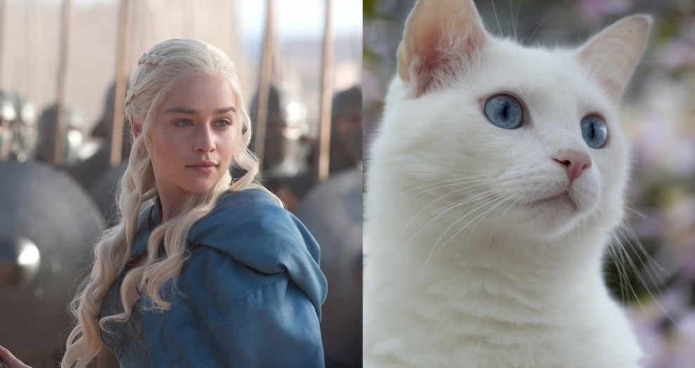 game of thrones cats Daenerys