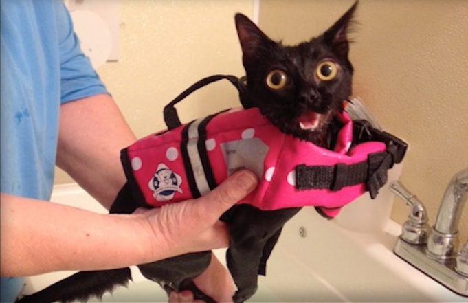 paralyzed kitten gets second chance and new home