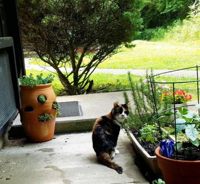 senior cats 8