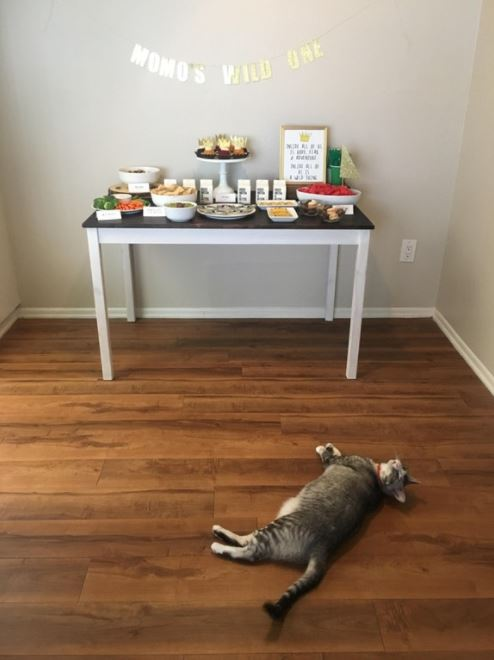 woman throws birthday party for her cat 1