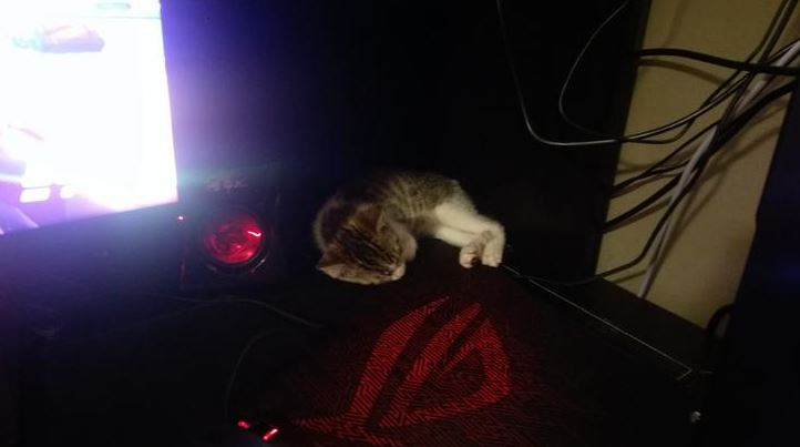 kitten found shot in streets gets forever home 9