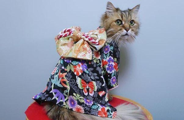 cats in kimonos 10
