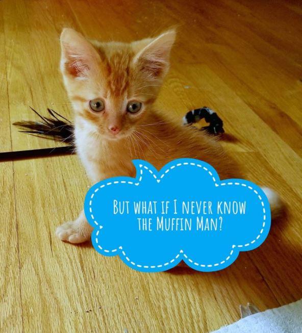 worried kitten gets captions 3