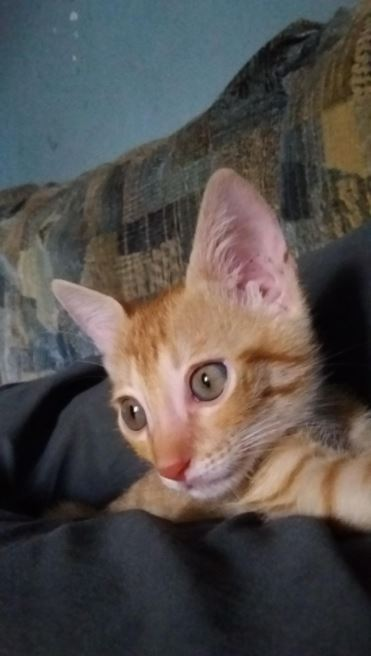 stray kitten found in trash gets forever home 7
