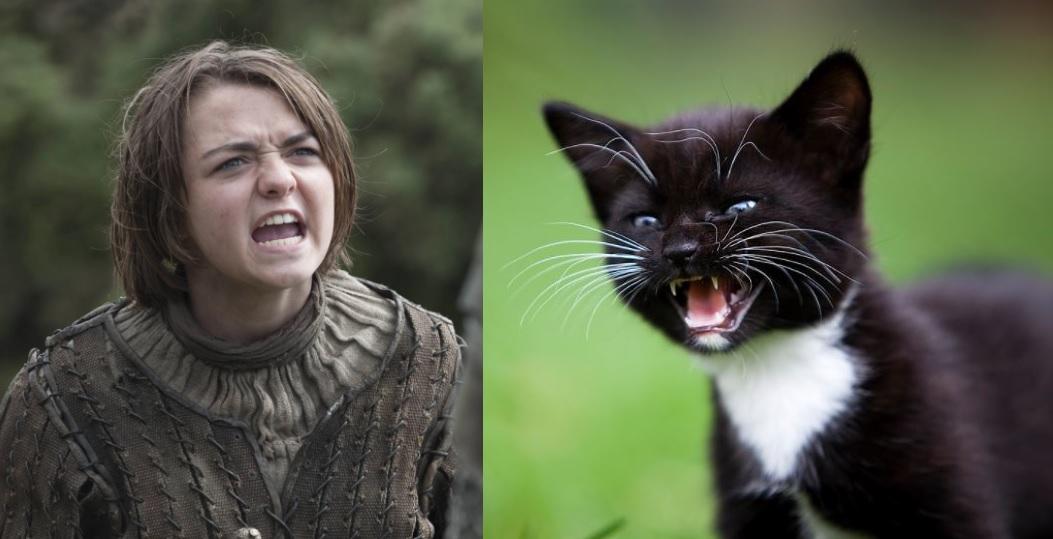 game of thrones cats arya stark