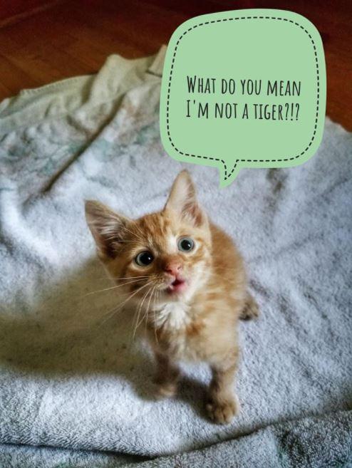 worried kitten gets captions 1