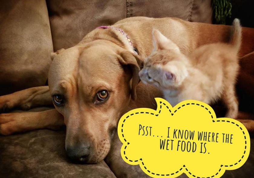 worried kitten gets captions 7