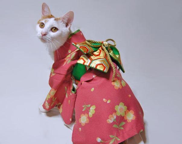 cats in kimonos 12