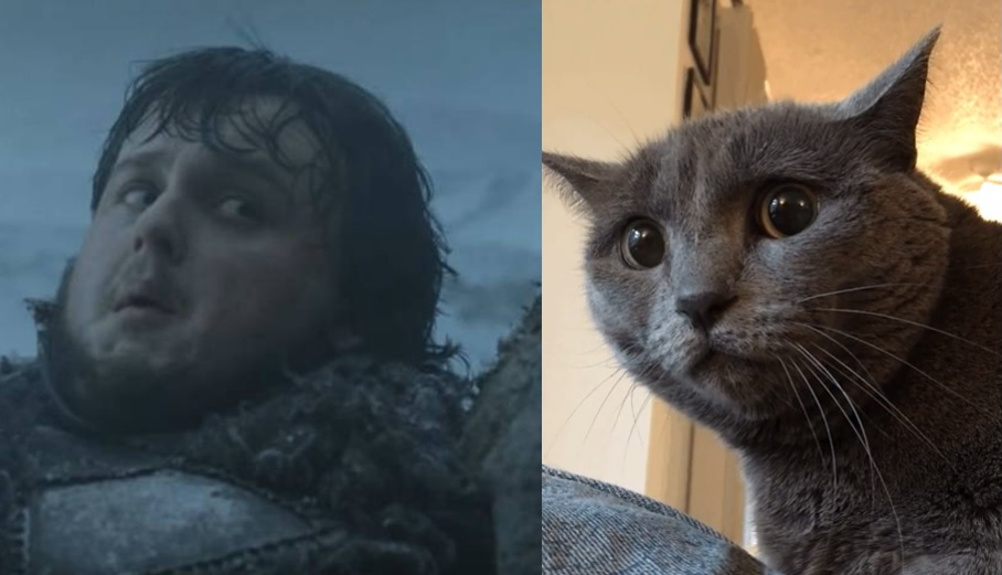 game of thrones cats sam tarley
