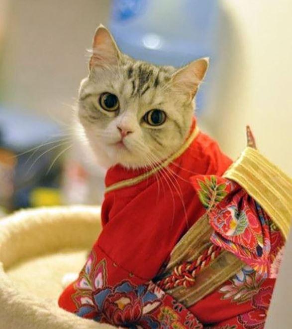 cats in kimonos 4